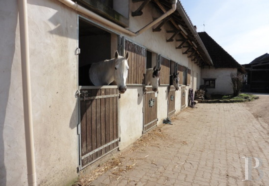 french equestrian properties for sale center val de loire   - 7